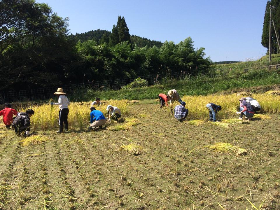 20140928稲刈り